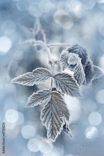 Fototapety, obrazy : a frozen leaf and bokeh