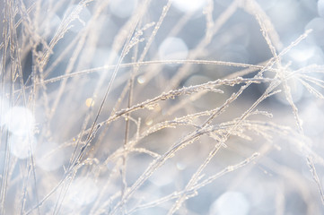 frozen grass with hoarfrost - a winter background