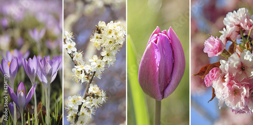 Frühlingsquartett