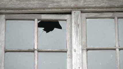 Throwing Rock Through Window
