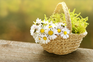 Korb mit Gänseblümchen, basket with daisies