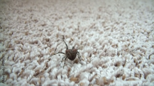 Spider Running Away Close-up