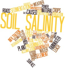 Word cloud for Soil salinity