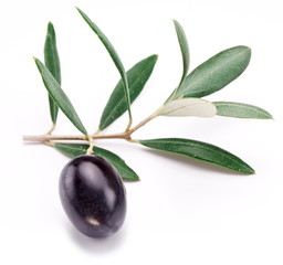 Ripe black olive with leaves.