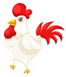 chicken isolated on white background vector