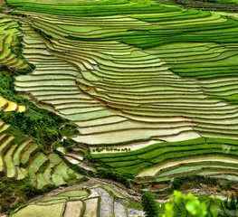rice field on terraced in mountain.