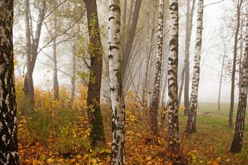 Autumn trees and fog