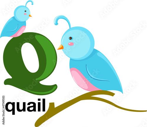 Animal alphabet letter - Q