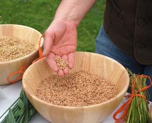 Handful of Corn