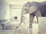 elephant in a room - Fine Art prints