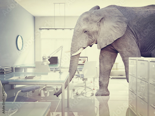 Foto op Plexiglas Olifant elephant in a room