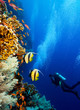 Scuba diver by coral reef