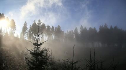 Wald im Nebel in den Alpen