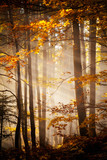 Fototapety Beautiful autumn woods landscape
