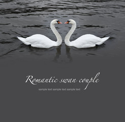 Romantic swan couple