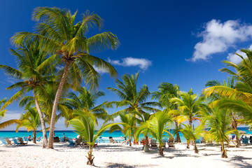 Tropical Beach, Saona Island, Dominican Republic