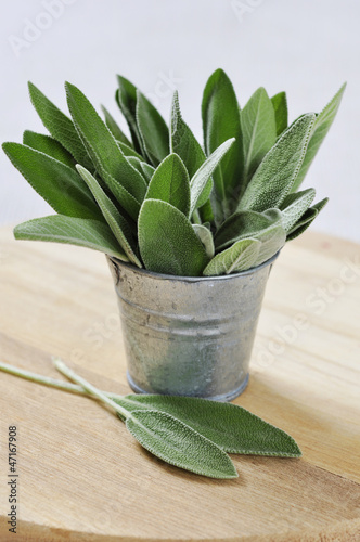 Sage leaves in a bucket