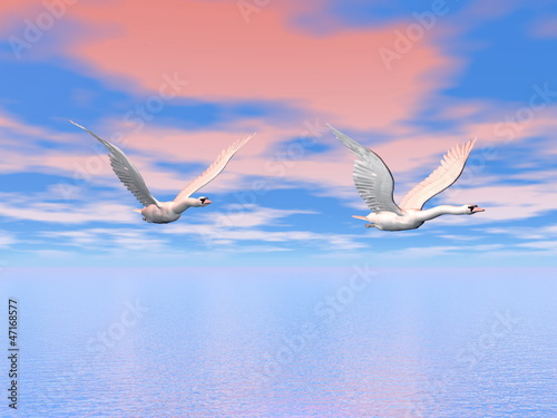 Swans flying - 3D render