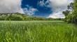 Green field under blue sky. Beautiful nature background