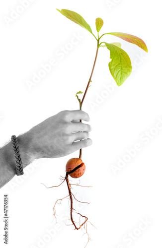 Croissance - Plante tenue dans une main