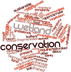 Word cloud for Wetland conservation