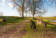 Two grazing donkeys in an autumnal landcscape