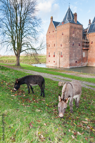 Two donkeys grazing in front of an old Dutch castle
