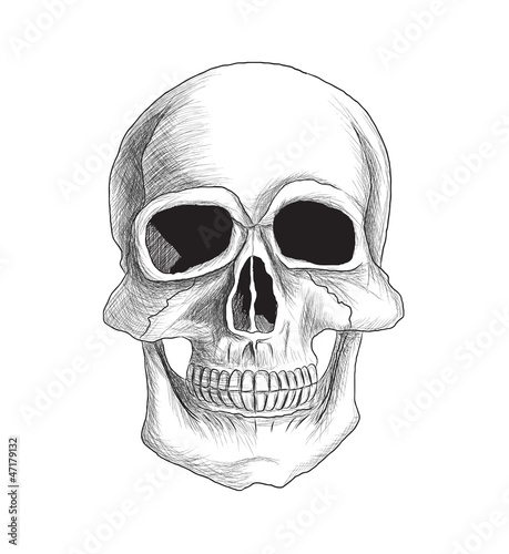 Skull vector illustration. Isolated on white. Very detailed.