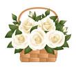White roses in basket. Vector illustration.