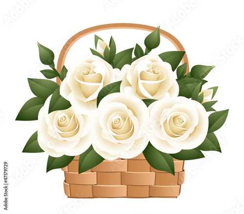 White roses in basket. Vector illustration.