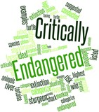 Word cloud for Critically Endangered poster