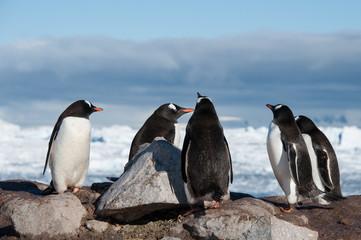 Antarctic penguins in wild nature