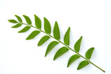 Curry leaves herb