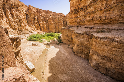 Fotobehang Tunesië Canyon in the oasis of Tamerza, Tunisia
