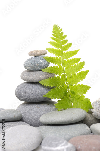 spa background- fern leaves and stones