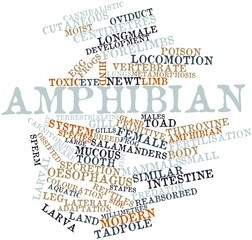 Word cloud for Amphibian
