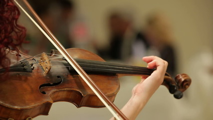 Musician playing the violin on the wedding