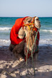 Camel sitting over sea background