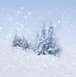 Fototapety Verschneite Tannenbäume