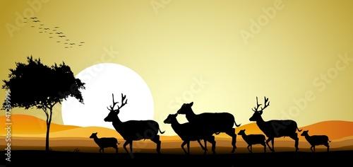 sylwetka piękna sylwetka jelenia z tle zachodu słońca