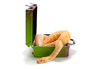 Snake in a box