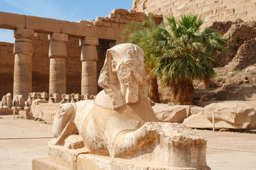 Sphinx. Karnak Temple, Luxor, Egypt