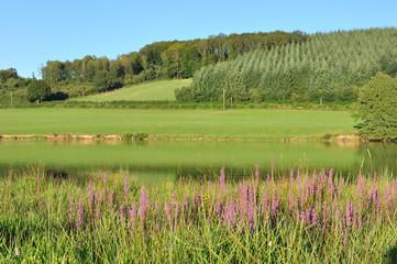 paysage du Morvan