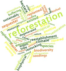 Word cloud for Reforestation