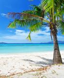 Green tree on a white sand beach. Malcapuya island, Philippines.