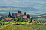 Tuscany vineyard 04