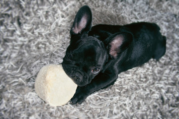 A puppy chewing a toy indoors