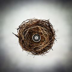 compass nest
