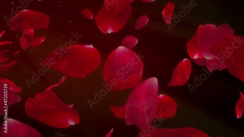 Rose Petals - romantic background