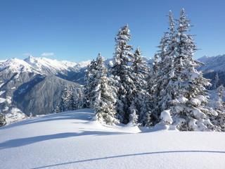 Weihnachtsbäume in der Winterlandschaft